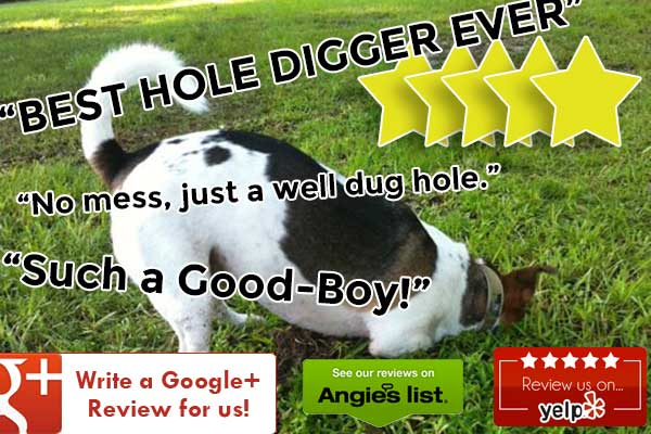 Digging up SEO with better reviews